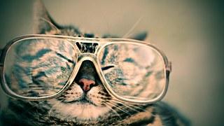 cat-984097__180