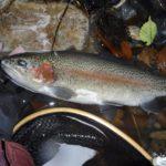 奈良子釣りセンターさんへ初釣行。立冬の管釣りで静かな歓びに満たされましたな。