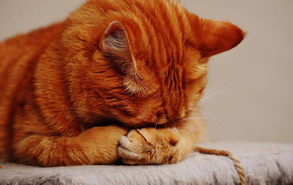 cat-1675422_1920