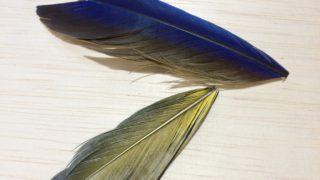 メキシコ・インコの尾羽根でニンフを試作。(極短です)